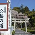 106 2011.01.15up 本堅田/Honkatata 337 合格の道にサクラサク