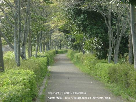 新緑のまぶしい遊歩道