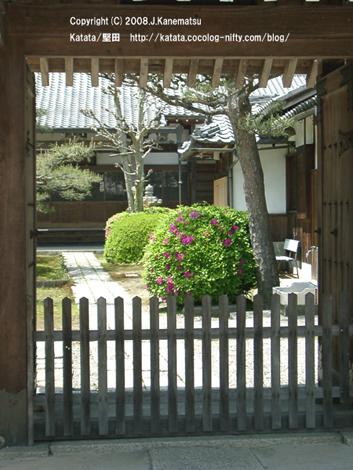 額縁のようなお寺の門の奥に、つつじの花が咲いている。