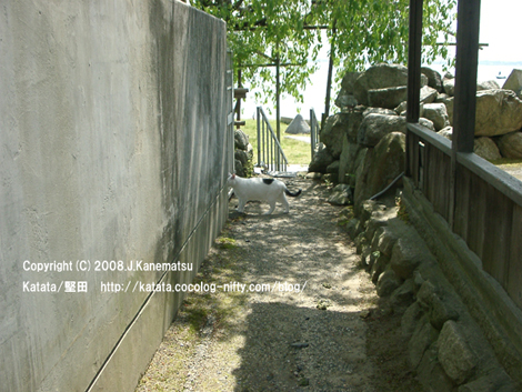 都久生須麻神社の路地と猫。琵琶湖が見えている。