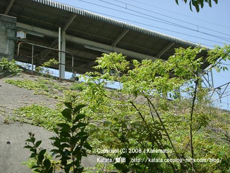 堅田駅のホームの下から撮影。空を見上げる青年。
