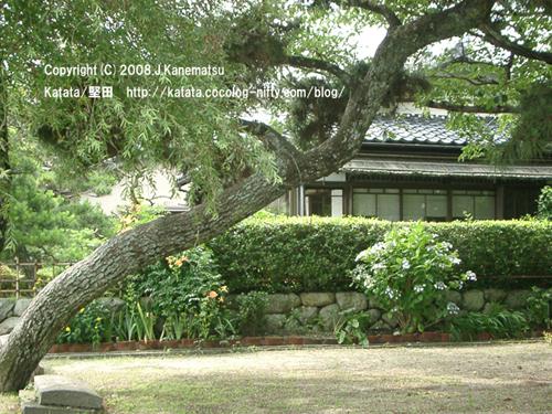 松の木の向こうに初夏の民家