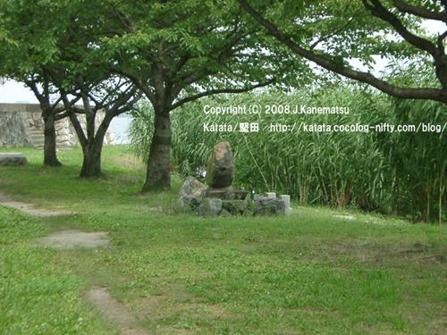 7月の琵琶湖畔に、葦(アシ/ヨシ)が生い茂る。