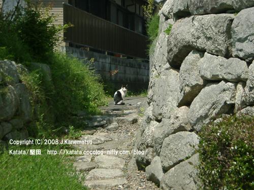 石垣の路地の向こうに日本猫