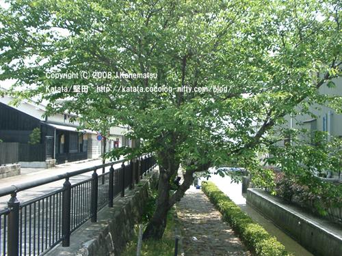 水路と桜の木の緑、散歩道、景観に配慮された町並み