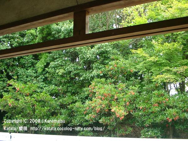 地蔵堂の建物を枠に見立てて眺める、夏の緑