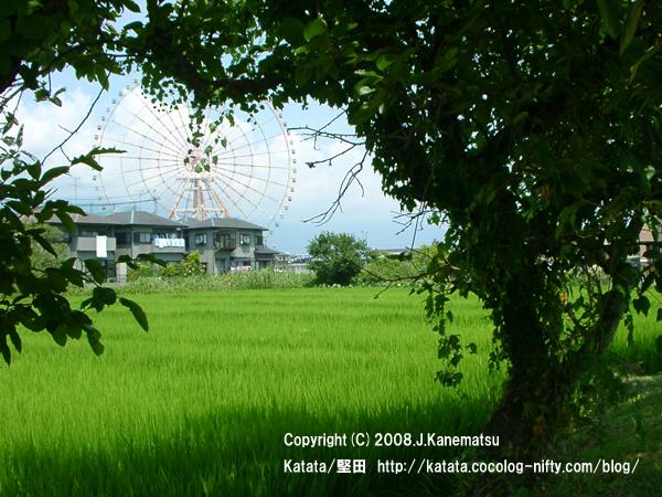 夏の田んぼと住宅街、遊園地の観覧車