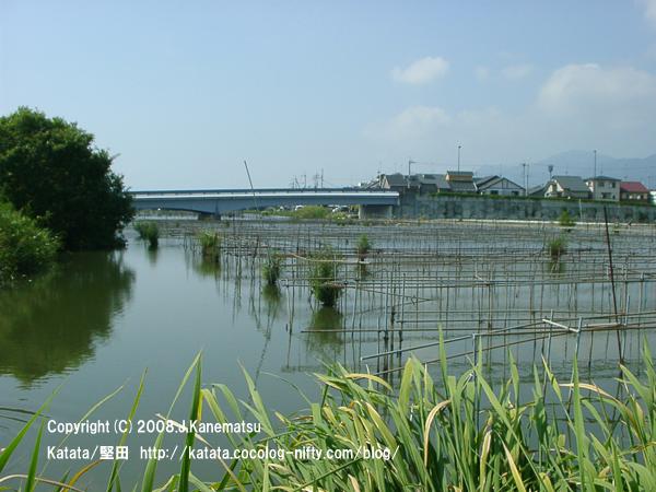 堅田内湖のほとりから、内湖大橋を見ている