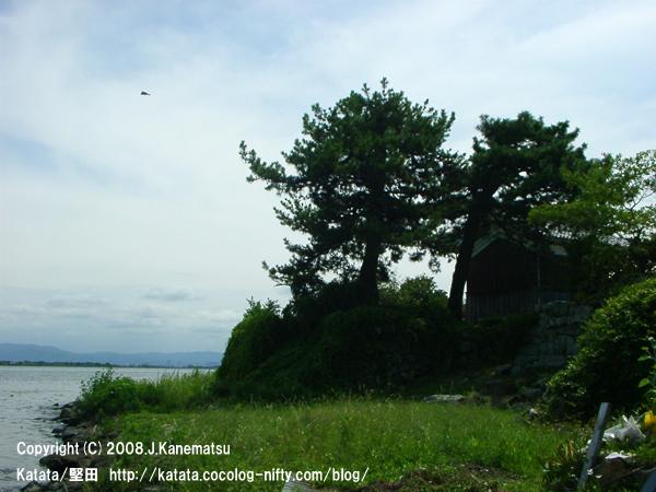 琵琶湖のほとりの高台、松の木に囲まれた民家。上空を飛ぶ一羽のトンビ。