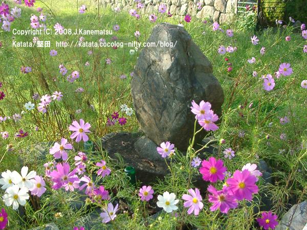 おとせの石とコスモスの花