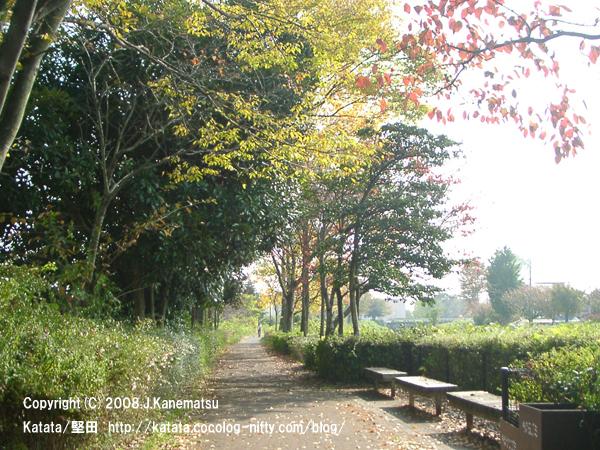 天神川沿いの遊歩道と紅葉