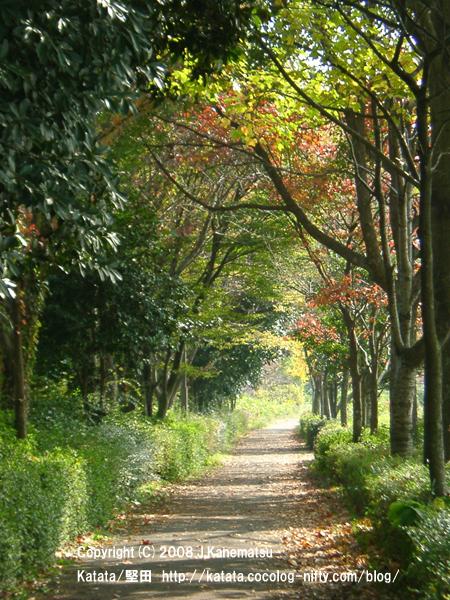 天神川沿いの遊歩道