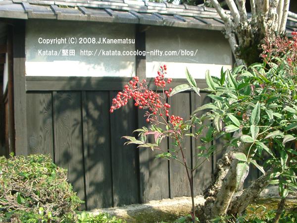 庭先のナンテン
