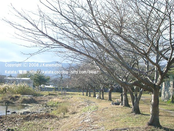 琵琶湖の水辺と、冬の桜並木