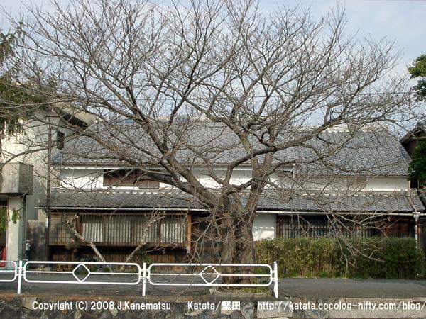 民家と、冬の桜の木