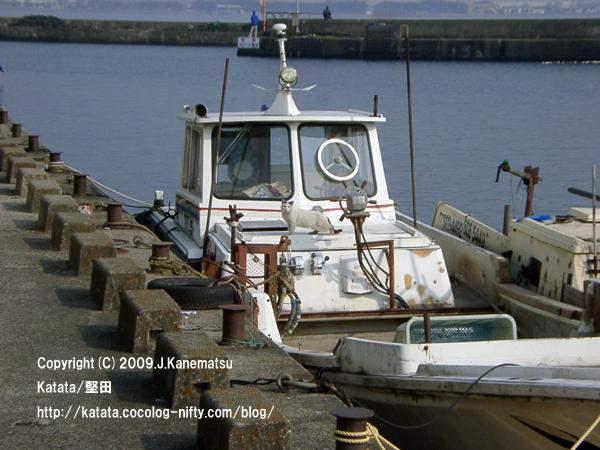堅田漁港の船の上の猫