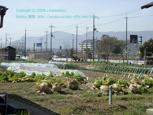"""堅田(滋賀県大津市)の写真 今堅田 「今堅田1丁目・春の畑」 photograph of Katata,Otsu,Shiga,Japan  Imakatata """"Imakatata 1-chome;Field of spring """""""