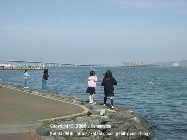 ユリカモメと少女、琵琶湖大橋