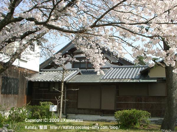 茶室玉鈎亭(ぎょくこうてい)と桜
