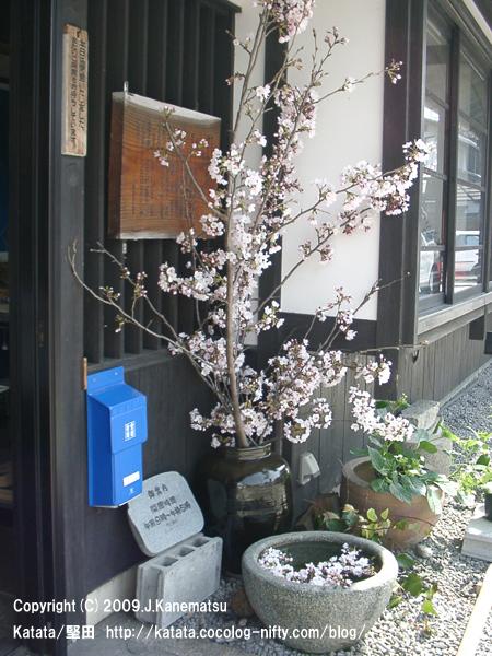 湖族の郷資料館と桜