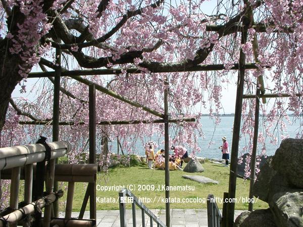 十六夜公園と枝垂桜と子どもたち