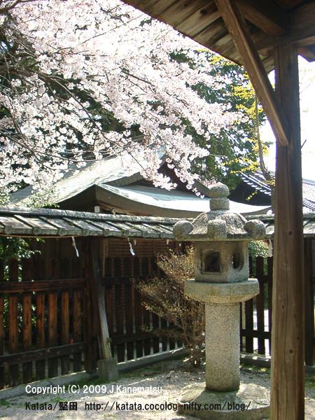 伊豆神社本殿の灯篭と桜