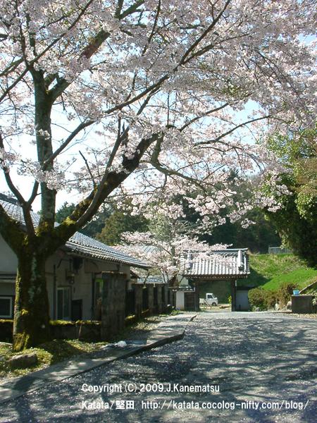 本堅田のある場所の桜
