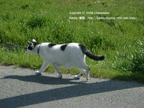 畑の脇の道を歩く猫