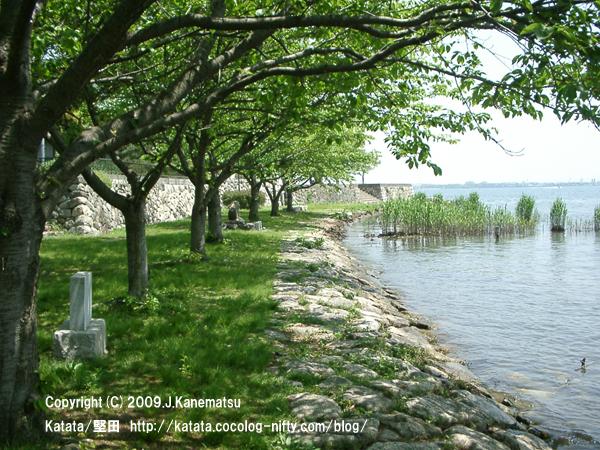 琵琶湖と葉桜
