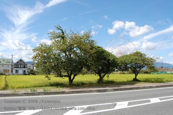三本の柿の木、田んぼ、お菓子のような家、青い空、遊園地の観覧車