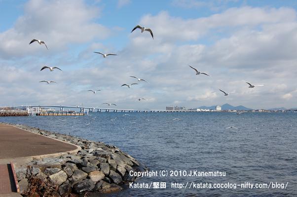 ゆりかもめ、飛ぶ(琵琶湖大橋を背景に)