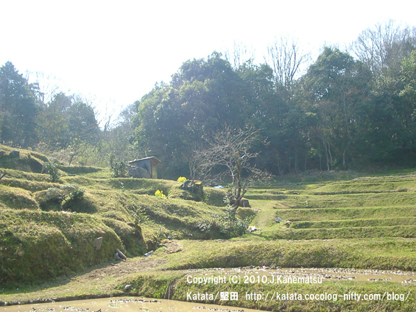 里山の風景・菜の花と棚田