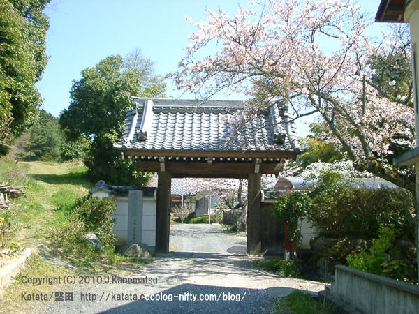 妙法寺の門と桜