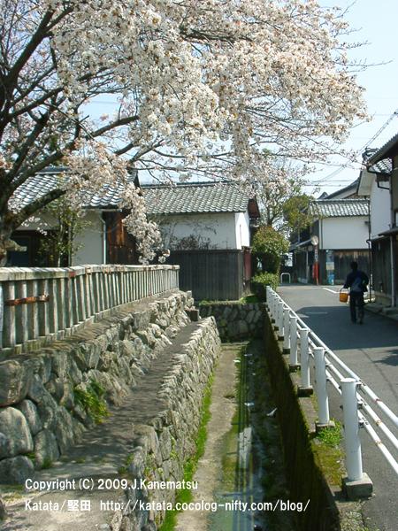 蔵通り、桜咲く