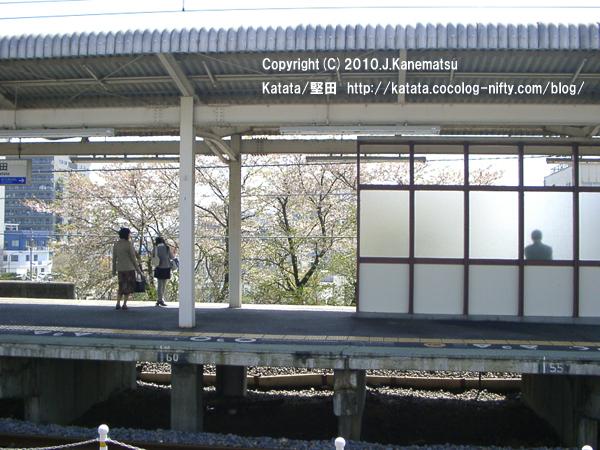 堅田駅の葉桜