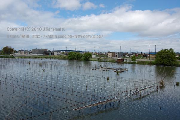 5月の堅田内湖