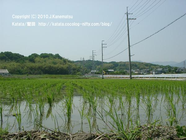 春日山と田んぼの風景 (堅田駅の裏から)