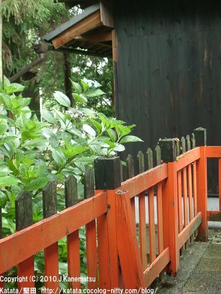 朱色の柵と漆黒の蔵。その前でひっそりと残っていた紫陽花の花。