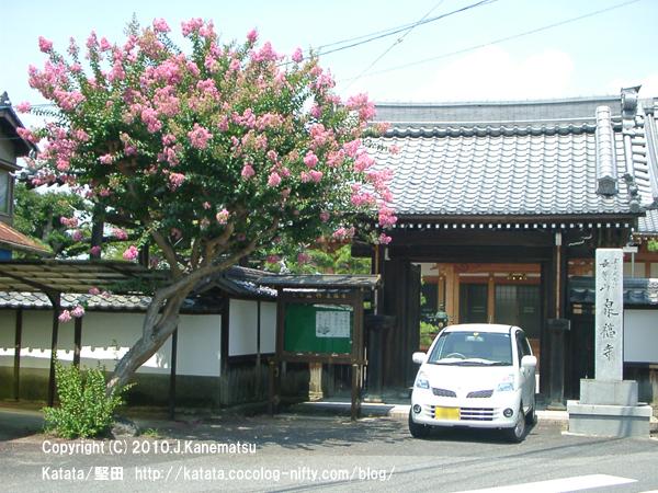 泉福寺の門とサルスベリの花