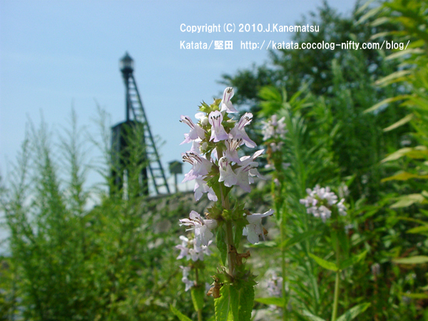 夏の花の向こうに、出島灯台