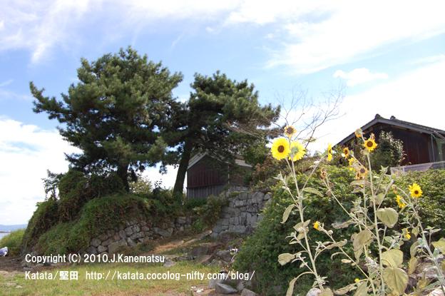 9月のヒマワリと、水辺の家