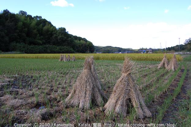 稲刈りが終わった田んぼと、乾かしている稲わら