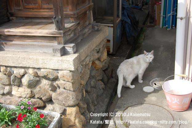 路地裏の猫 (地蔵堂と消火バケツの間で)