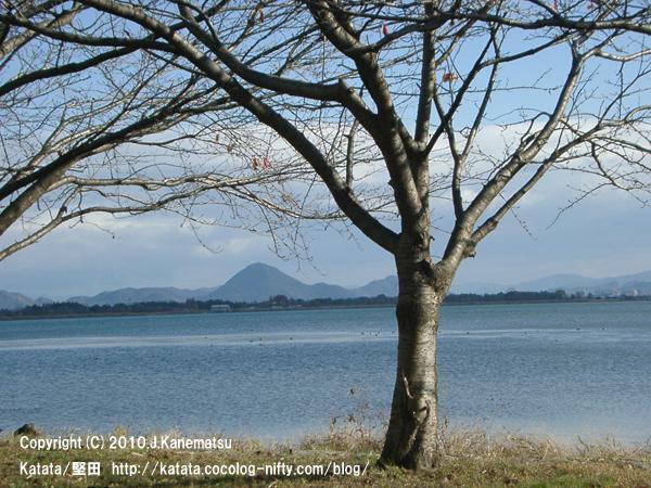 葉を落とした桜の木、琵琶湖、三上山(近江富士)