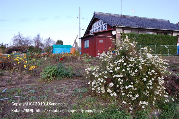 赤い家と白い花、色とりどりの花