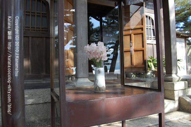 正月の花(観音堂前にて)