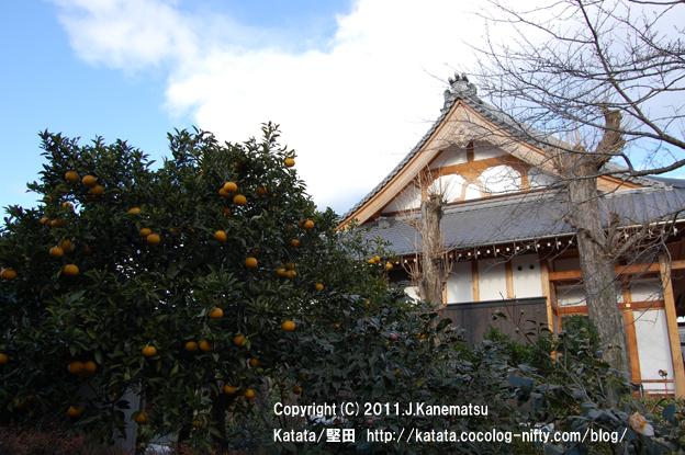 泉福寺と、ナツミカンの木