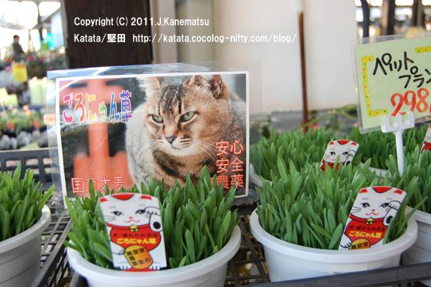 猫用の草、ごろにゃん草