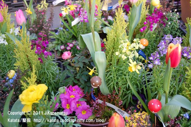 チューリップ、バラ、スイセン、春の花
