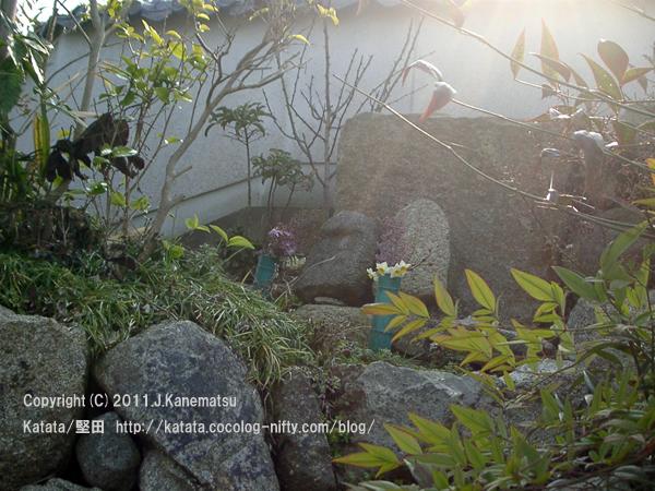 水仙の花のお供え。小さな石仏の前で